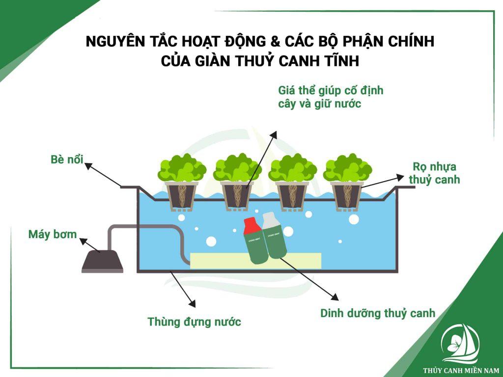 Kĩ thuật trồng rau thủy canh tĩnh và ưu nhược điểm bạn cần biết