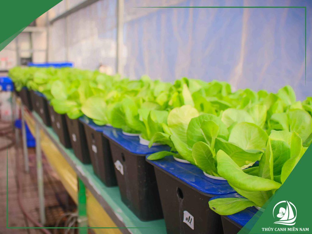 Giàn trồng rau thủy canh tĩnh phù hợp với hộ gia đình tại thành phố