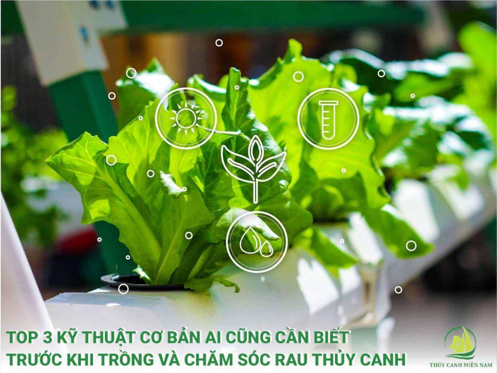 Những kỹ thuật trồng và chăm sóc rau thủy canh cơ bản cho vườn rau sạch tại nhà