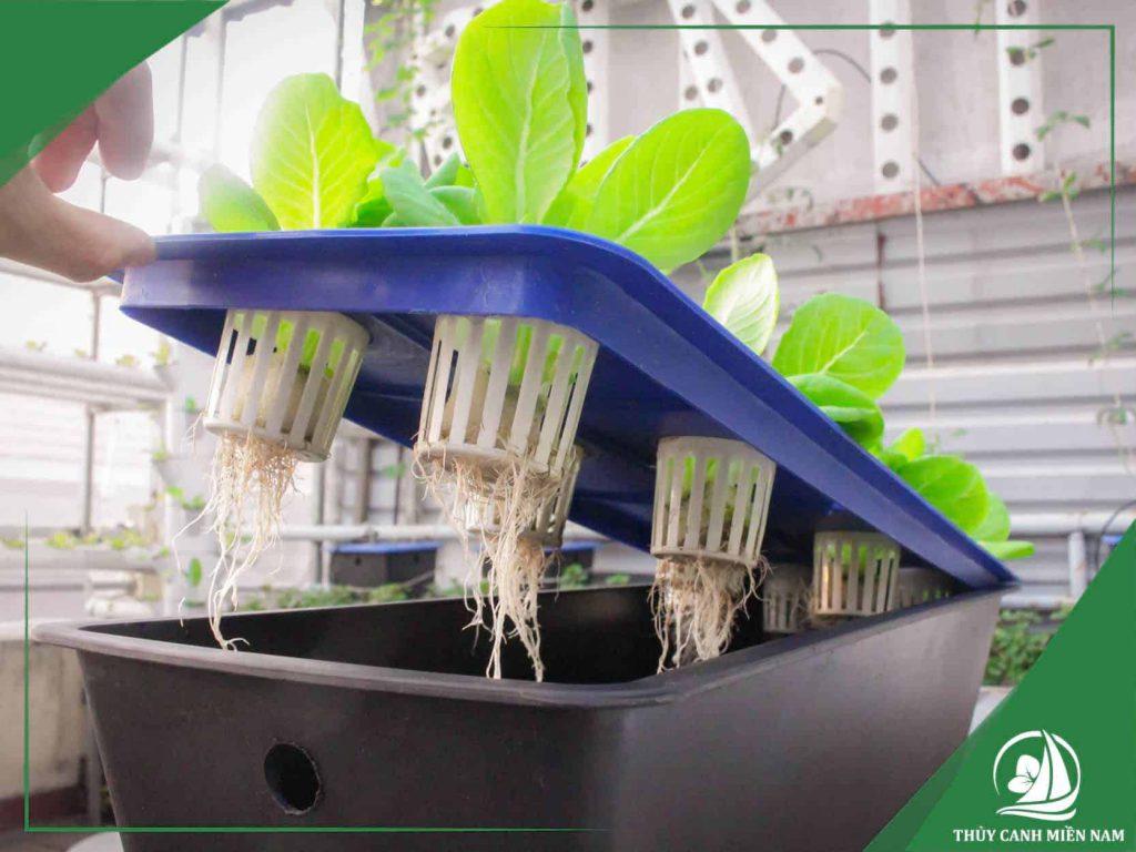 Dàn rau thủy canh tĩnh được thiết kế hệ thống thủy canh tại nhà