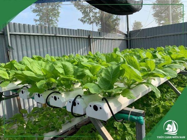 Hình ảnh mô hình vườn rau thủy canh mini farm