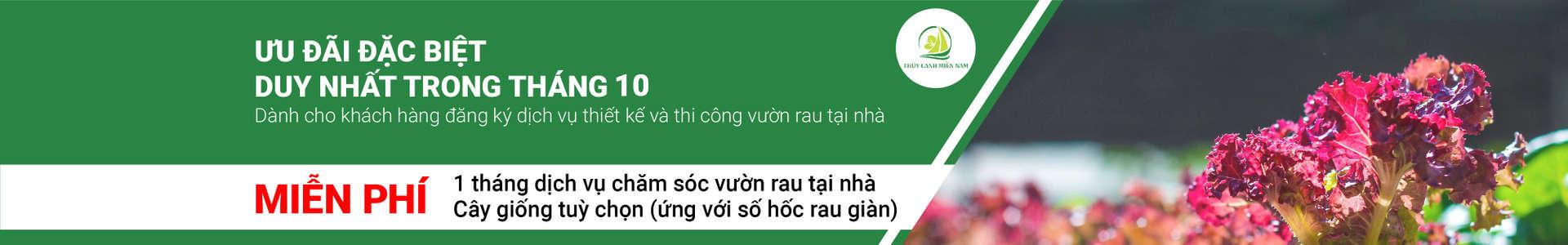 uu-dai-thang-10-danh-cho-khach-hang-thi-cong-tron-goi-vuon-rau-tai-nha