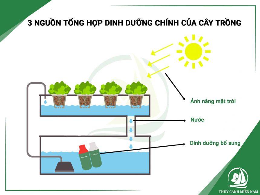 3-nguon-tong-hop-dinh-duong-cua-cay-trong-bang-phuong-phap-thuy-canh