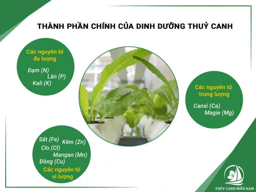 cac-thanh-phan-chinh-trong-dinh-duong-thuy-canh